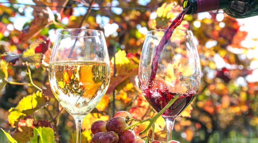 Genuss in der Pfalz: Weinprobe im Herbst, Rotwein, Weißwein, Trauben  :)